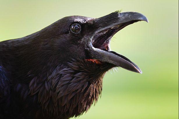Jett Jergens-Crow